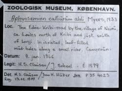 02-0-Copr_1966-JJ_Scheel_Holotype_NHMD_P354023t.jpg
