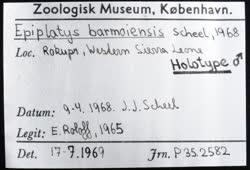 02-0-Copr_2020-JJ_Scheel_Holotype_NHMD_P352582t.jpg