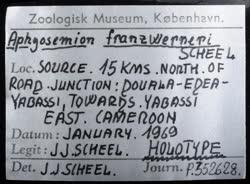02-0-Copr_2020-JJ_Scheel_Holotype_NHMD_P352628t.jpg
