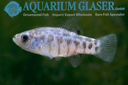 06-0-Copr_2019-Aquarium_Glasert.jpg