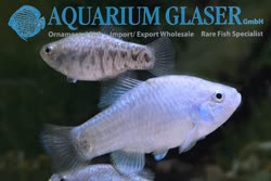 08-0-Copr_2019-Aquarium_Glasert.jpg