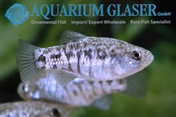 10-0-Copr_2019-Aquarium_Glasert.jpg