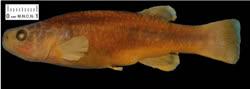 00-0-Claudia_Ornelas-Garcia-holotypet.jpg