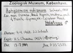 02-0-Copr_2020-JJ_Scheel_Holotype_NHMD_P352586t.jpg