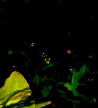 80-0-Copr_2012-RJ_Sextont.jpg