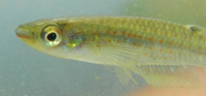 01-0-Copr_2014-Fishplore-dot-comt.jpg