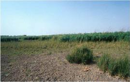 habitat1.png
