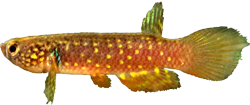 00-0-Copr_2020-Costa_Holotype_UFRJ_6400t.png