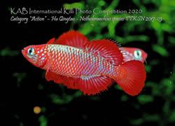 12-0-Copr_2021-KABt.jpg