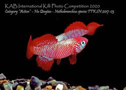 24-0-Copr_2021-KABt.jpg