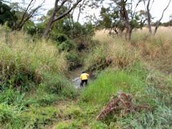 Segese_River_Ilunde_Forest_Reserve_kiri-2008lt.jpg